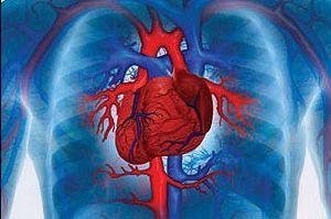 УЗИ сердца платно